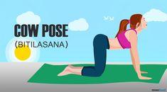 Bitilasana: Cow Pose Yoga