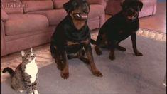 Watch my new well-behaved doggo – GIF
