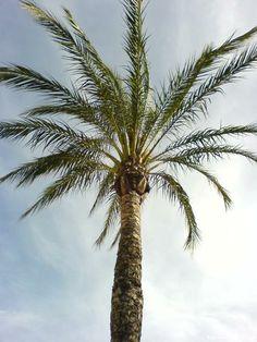 Palme - Spanien - Spain - España