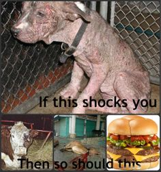 Pet abuse and Factory Farming are no different. Think about what companies you support before you buy your meat. Factory Farming and Farm raised/ or free range are different.