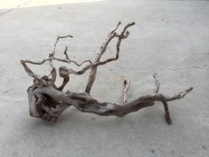 MM Redmoor Wood -- driftwood plant shrimp moss discus spiderwood spider fish #wood