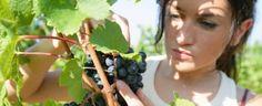 Agroalimentare, Italia paese partner alla 83ma edizione Fiera Agricoltura di Novi Sad