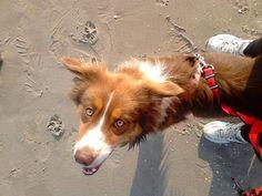 Niuchacz: Akcesoria do biegania z psem