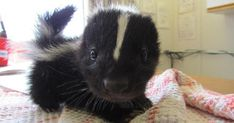 50  Of The Cutest Baby Animals Of All Time   Bored Panda