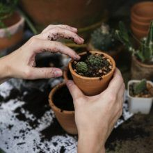 Choosing the right pot for succulents: the pros and cons - Succulent Plant Care Planting Seeds, Planting Succulents, Garden Plants, Garden Hose, Succulent Potting Mix, Succulent Pots, Benefits Of Gardening, Gardening Tips, Desert Plants