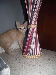 Adopta a Kenzo ( Gato Comun ) - #adopta #gatos