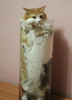 cats_are_liquids_07