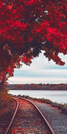 My Favorite Wallpaper: Autumn road Fall Background Wallpaper, Love Background Images, Photo Background Images, Photo Backgrounds, Beautiful Landscape Wallpaper, Beautiful Landscapes, Home Beach, Foto Face, Landscape Photography