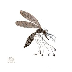 Spangled Mosquito insect specimen original watercolor painting. $52.00, via Etsy.