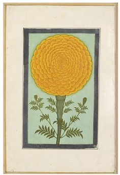 a marigold. (Painting), India (north, made), 17th century (made)