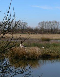 Le parc du Marquenterre. Groot natuurpark waar zeevogels neerstrijken in de baai van de Somme.