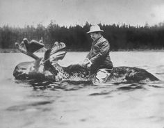 Teddy Roosevelt riding a moose.
