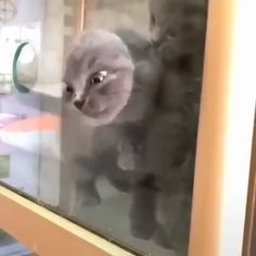 Top Funny videos funny Life - Time To Laugh Funny Animal Memes, Funny Animal Videos, Cute Funny Animals, Funny Animal Pictures, Cute Baby Animals, Cat Memes, Animals And Pets, Funny Cats, Wild Animals