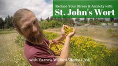 John& Wort, Medicine for the People Herbal Tinctures, Herbalism, Leaf Structure, Herbs For Health, Depression Treatment, Native American Tribes, Summer Solstice, Medicinal Plants, St John's
