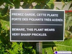 English+Translations+On+Signs+:+theBERRY