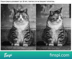 Jakiś smutny kot, baaardzo :( #zwierzęta #kot #pupile