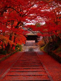 Kyoto, Japan 毘沙門堂 #Kyoto #AutumnLeaves