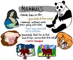 2º primaria: ANIMAL GROUPS