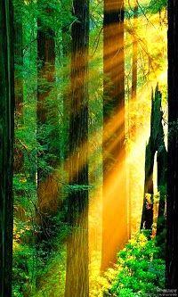 Redwood National Parks,Redwood Forests,California: