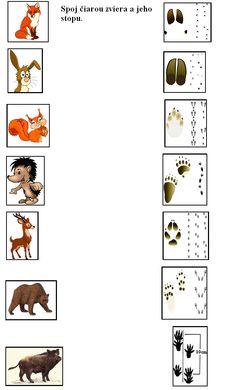 stopy lesných zvierat - Hľadať Googlom