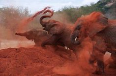 Imagen de elephant