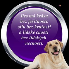 Motivation, Education, Dogs, Quotes, Animals, Animal Pictures, Quotations, Animales, Animaux