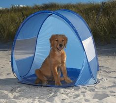 Golden Retriever Pup sitting in shade of a pop up tent for the beach or anywhere it gets hot. All good doggies deserve one! Dog Beach Cabana – $30 Great idea along with a cold bowl of fresh water!