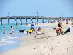 Dog beach in Venice, Fl