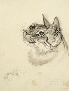 Study of a cat by Ludwig Heinrich Jungnickel (1881 - 1965)