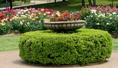 The Tyler Rose Garden is the largest municipal rose garden in America.  It offers a lot of gardening ideas.