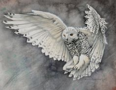 A poster of a snow owl drawing by Molly Harrison. Snowy Owl, Owl Art, Fairy Art, Cool Paintings, Fantasy, Artwork, Lion Sculpture, Wildlife, Watercolor