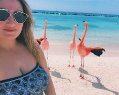 ✨ Sonhando com mar azul e areia branca ✨ - Giovana Quaglio Flamingo Beach Aruba, Instagram, Wanderlust, Animals, Blue, Animales, Animaux, Animal, Animais