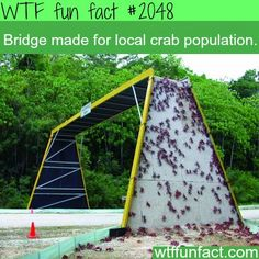 My dad would have a blast just picking the crabs off of this! ahaha