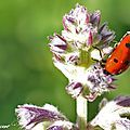 Respectons notre Mère Nature, changeons nos habitudes : Anti-pucerons naturels...