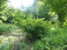 forest bush - Google Search