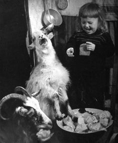 and then she said.....  goat and girl laughing. Vintage.