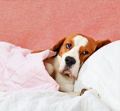 7 Home Remedies for Dog Seizures