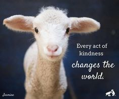 No matter how small, every act of kindness can change the world. For so many lambs like Jasmine, who make their way to Edgar's Mission,… Vegan Memes, Vegan Quotes, Vegetarian Quotes, Why Vegan, Animal Quotes, Save Animals Quotes, Animal Facts, Vegan Animals, Animal Rights