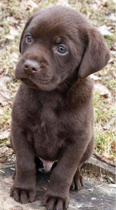 Top 5 Most Beautiful #Dog Breeds