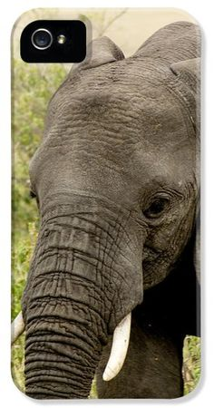 Solemn iPhone 5 / 5S Case elephant photography iphone case samsung galaxy case