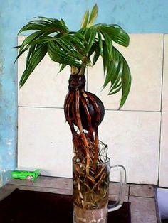 Bonsai Art, Bonsai Plants, Bonsai Garden, Garden Plants, Indoor Plants, Bonsai Trees, Bottle Garden, Plant Holders, Growing Plants