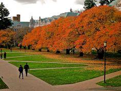 Autumn Leaves, University of Washington