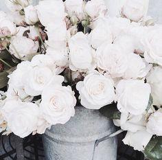 WHITE, ROSES