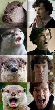 Otters that look like Benedict Cumberbatch (I don't know who Benedict Cumberbatch is, but the otters look like him.
