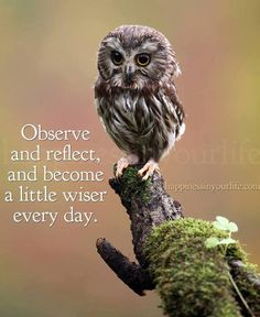 observe and reflect....