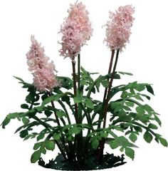 Astilbe Kit   mj-miniatures.com
