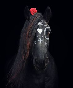 Beautiful sugar skull stallion~ Beautiful photo by Black horse photography