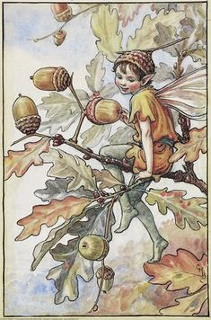 Illustration for the Acorn Fairy from Flower Fairies of the Autumn. A boy fairy sits in the branches of an oak tree looking towards the ground.  										   																										Author / Illustrator  								Cicely Mary Barker