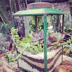 Blek krupuk adalah planter terrarium terbaik yang pernah diciptakan dalam sejarah peradaban manusia. And it's real!  #diy   #reuse   #recycle   #succulentcactus   #succulentCafe  #prepareTheCafe