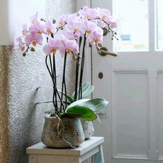 color orchids -- great website on how to care for orchids